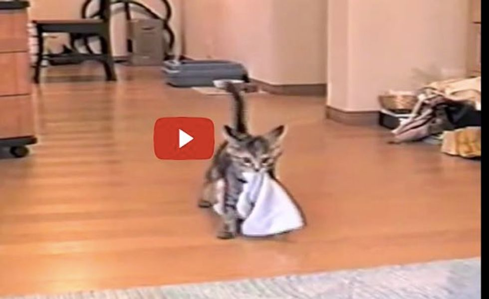 Kitty Fetching Big Towel