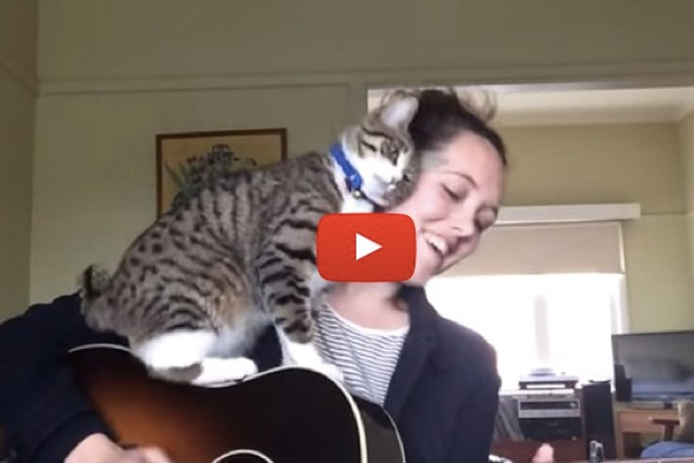 George The Cat Steals The Spotlight When His Mom Sings