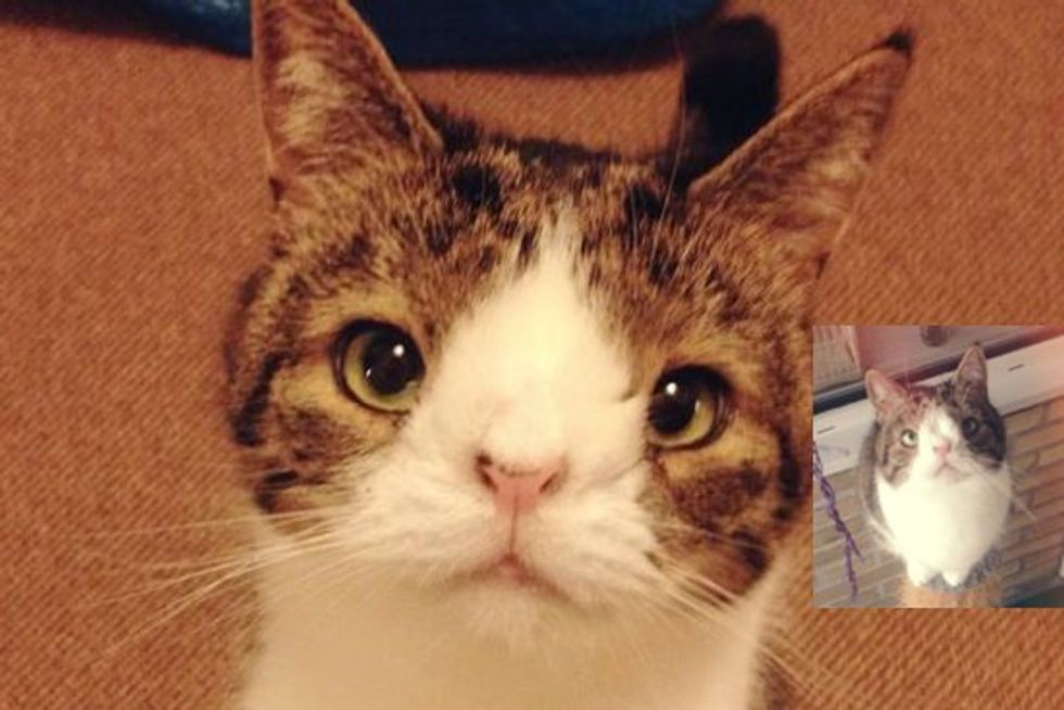 Monty The Special Cat With A Big Heart