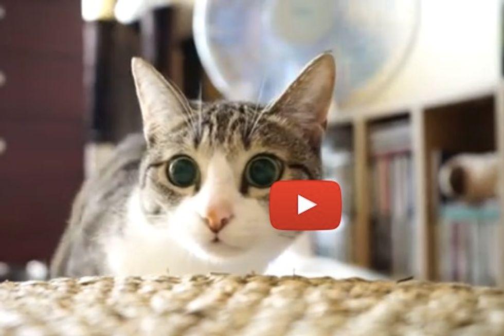 Cat Wiggle Jump