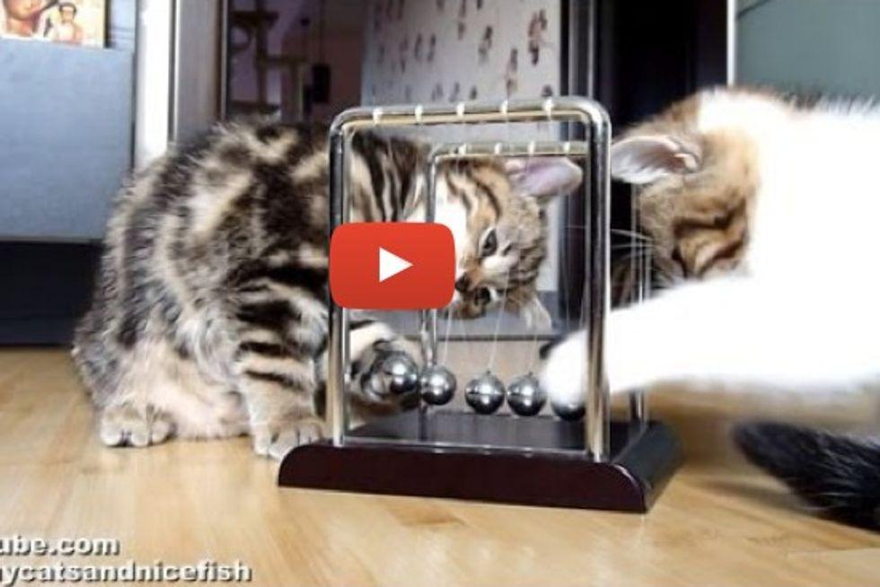 Kittens Learning Physics
