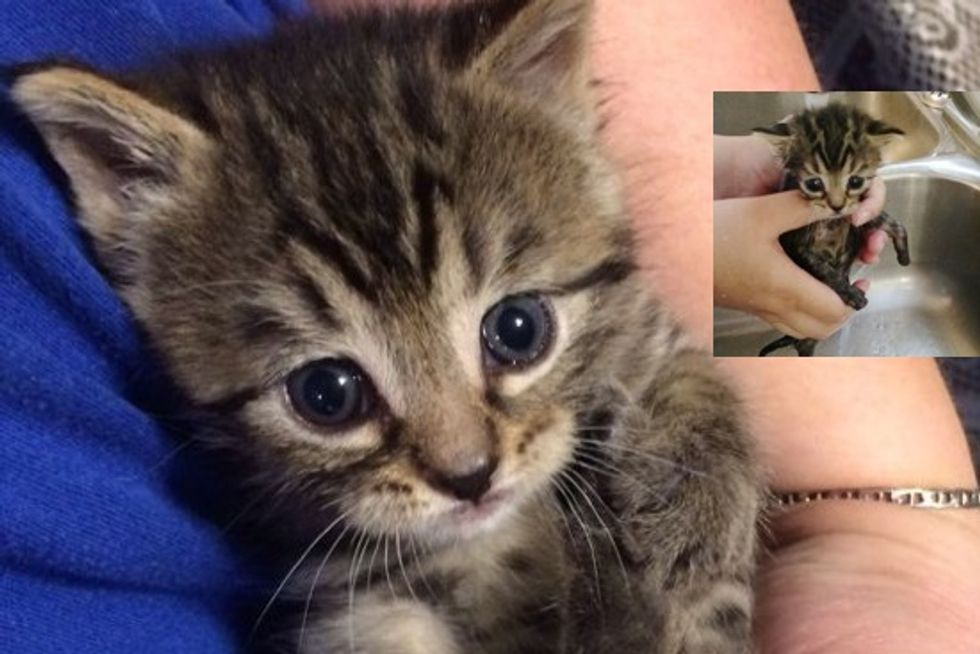 Trixie The Rescue Kitten Given A Second Chance