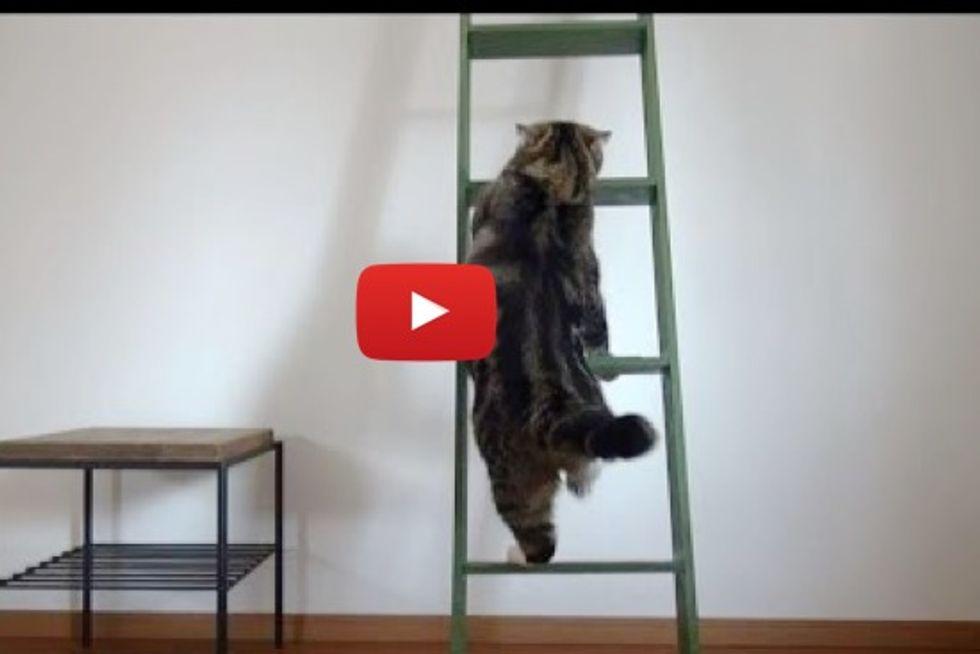 Maru And Hana Meets Ladder