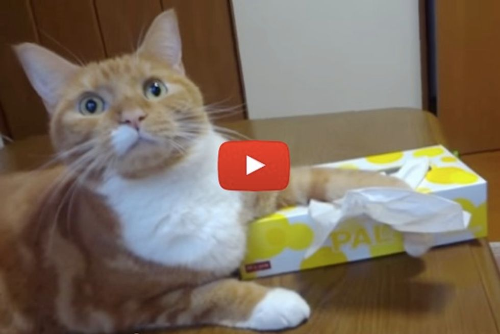 Cat Guarding Paper Tissues
