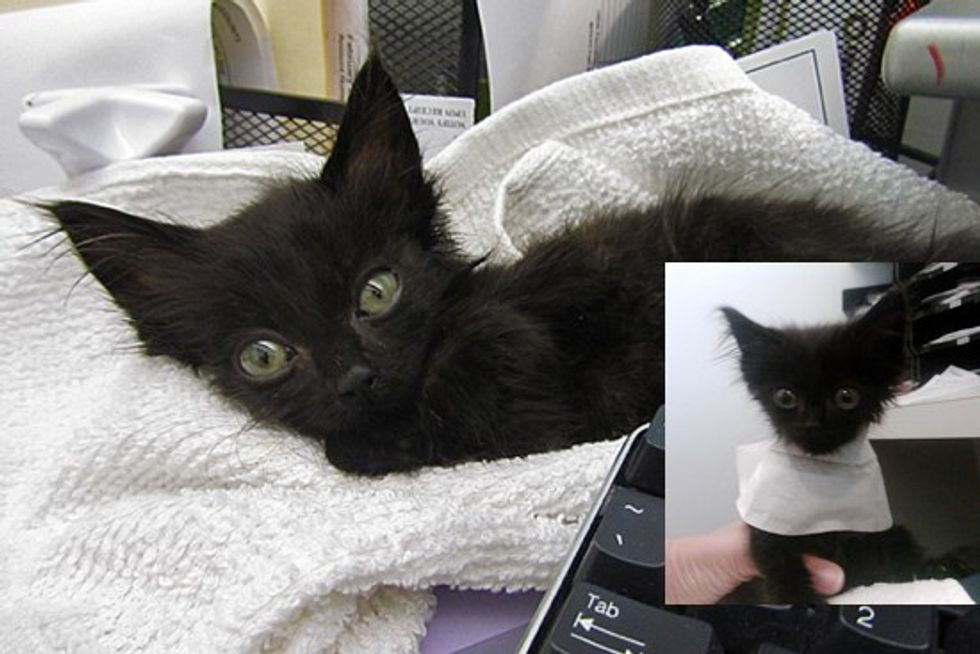 Marco The Rescue Cat Gets A Happy Ending