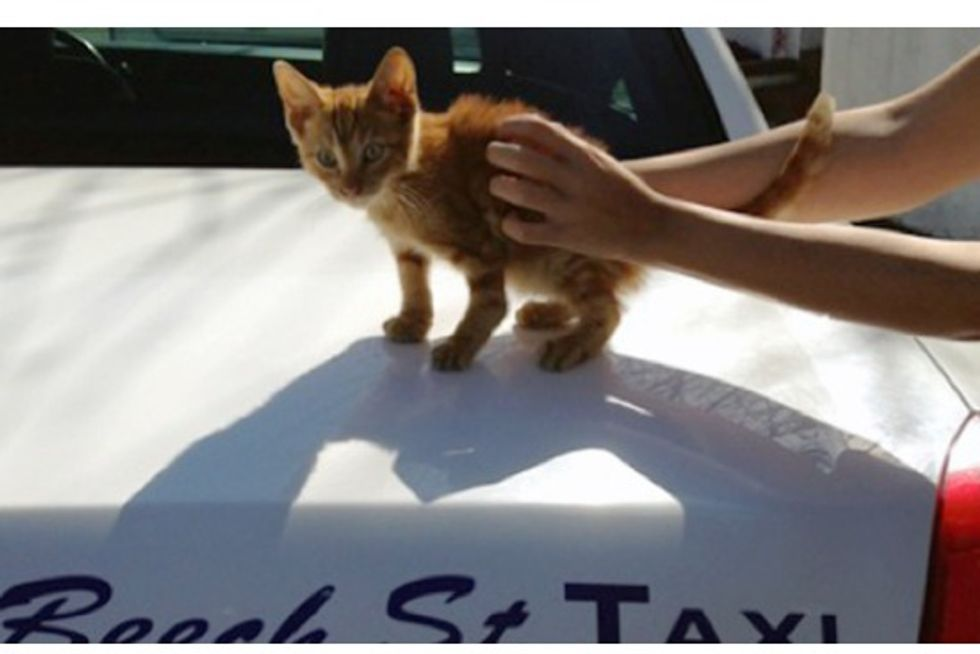 Cabbie Stops In Traffic To Save Kitten On Highway