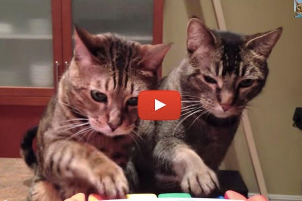Cat Duo Playing Piano