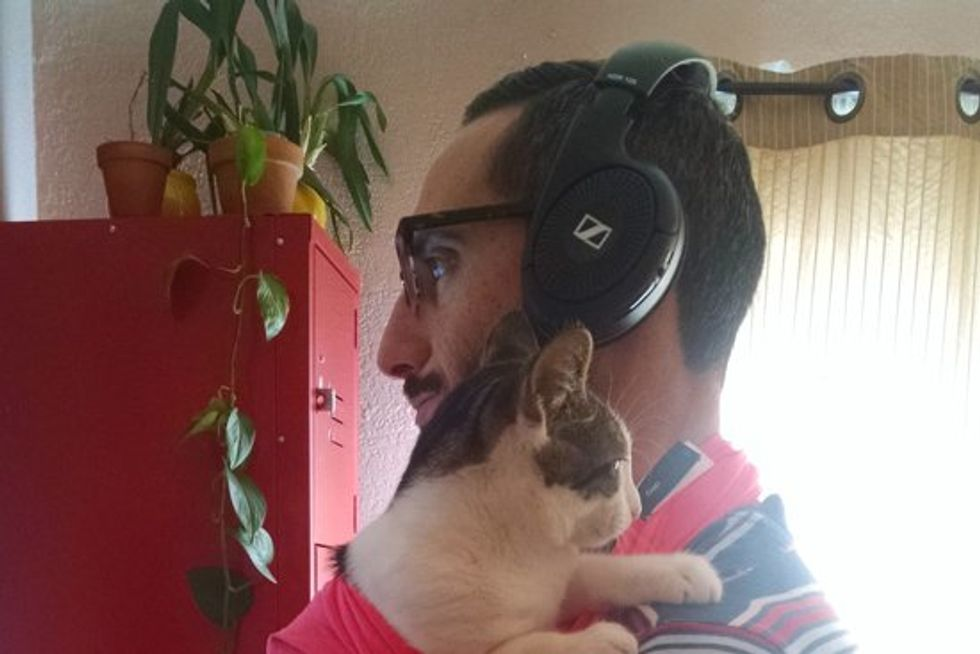 Man Comes Up With Idea To Snuggle His Affectionate Cat During Work