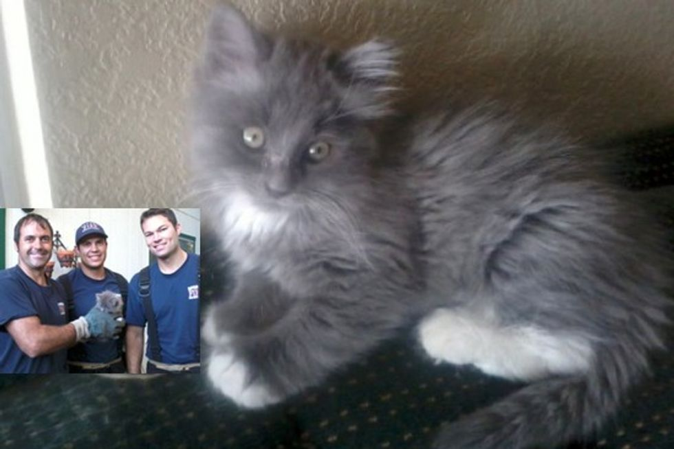 Tiny Feral Kitten Saved by Three Firefighters