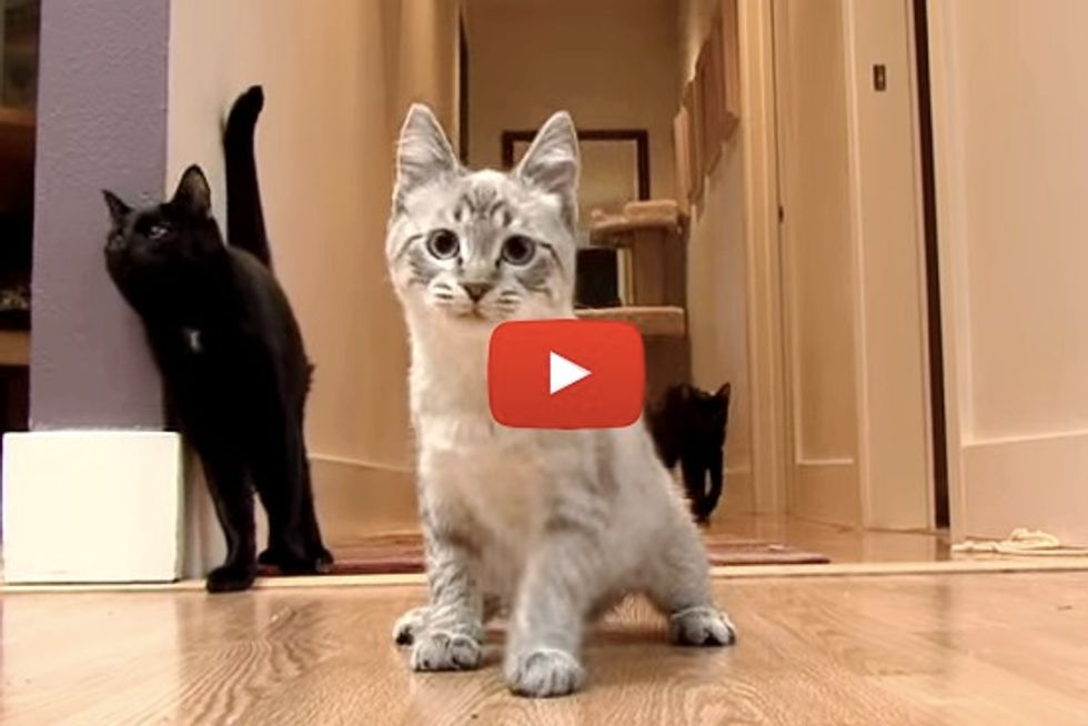 Tippy The Happy Wobbly Kitty Doesn't Let Her Disability Stand In Her Way