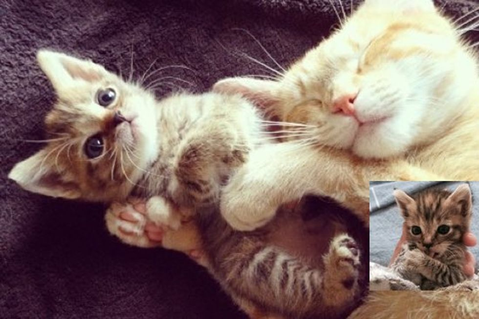 Tiny Rescue Kitten Finds Big Kitty Friends