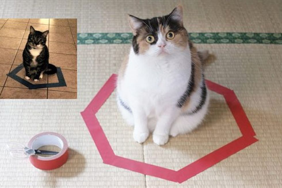How To 'Trap' A Cat - With Instructions And Results!