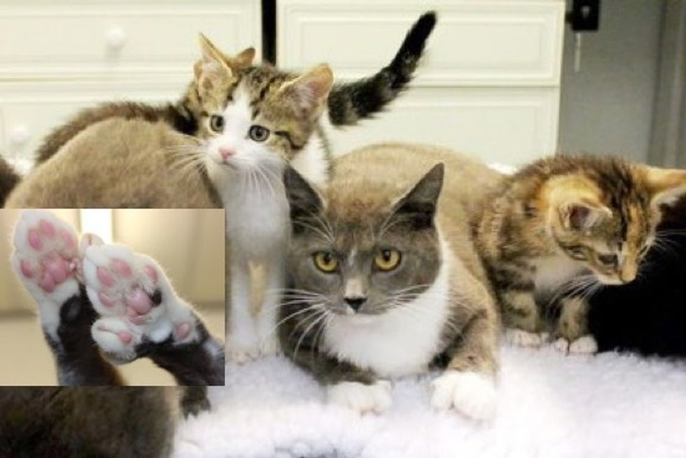 Extra-Toed Kitty Family Rescued In Birmingham - 180 Toesies!