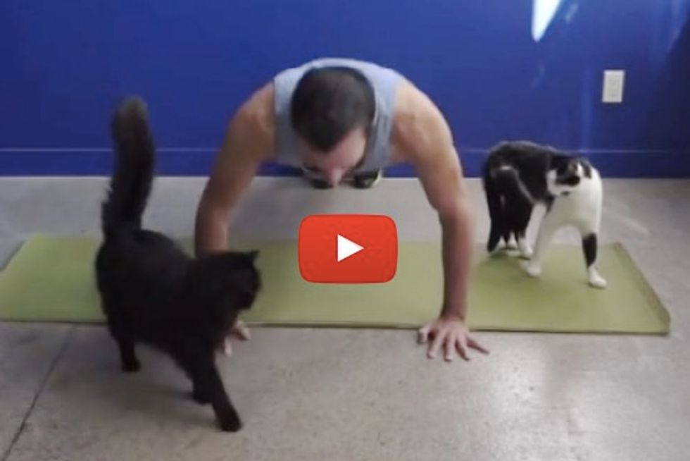Trying To Teach Exercise With Cats Around