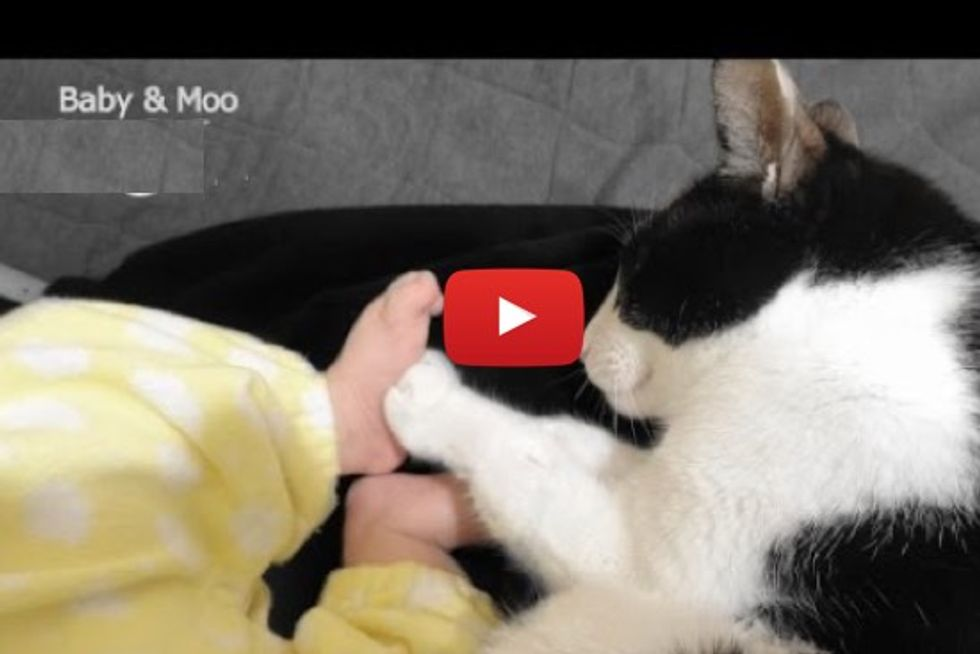 Moo The Cat And The New Baby