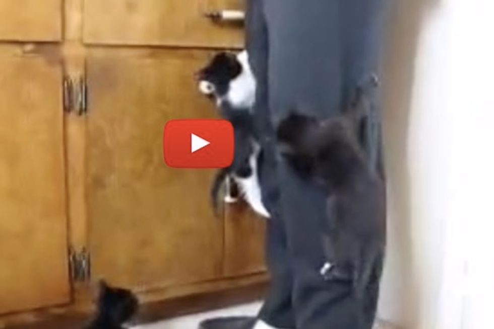 Foster Kittens Take A Hike Up Their Foster Dad