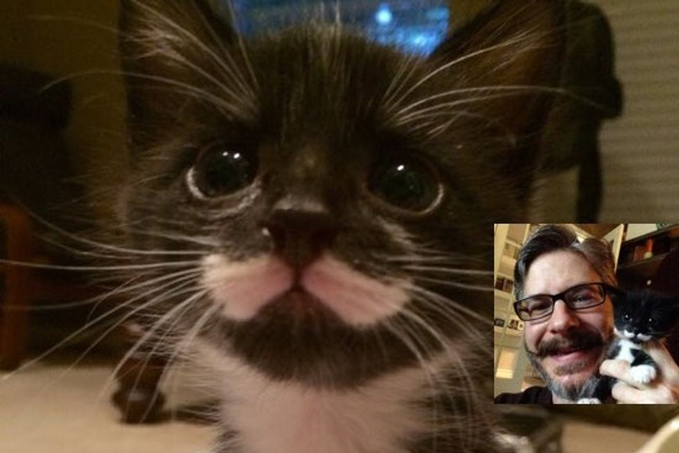 Meet Mustache The Dapper Little Kitten