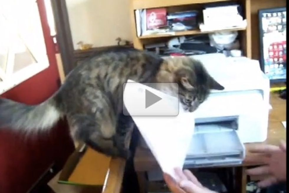 Ralph The Cat Helps Out In The Office