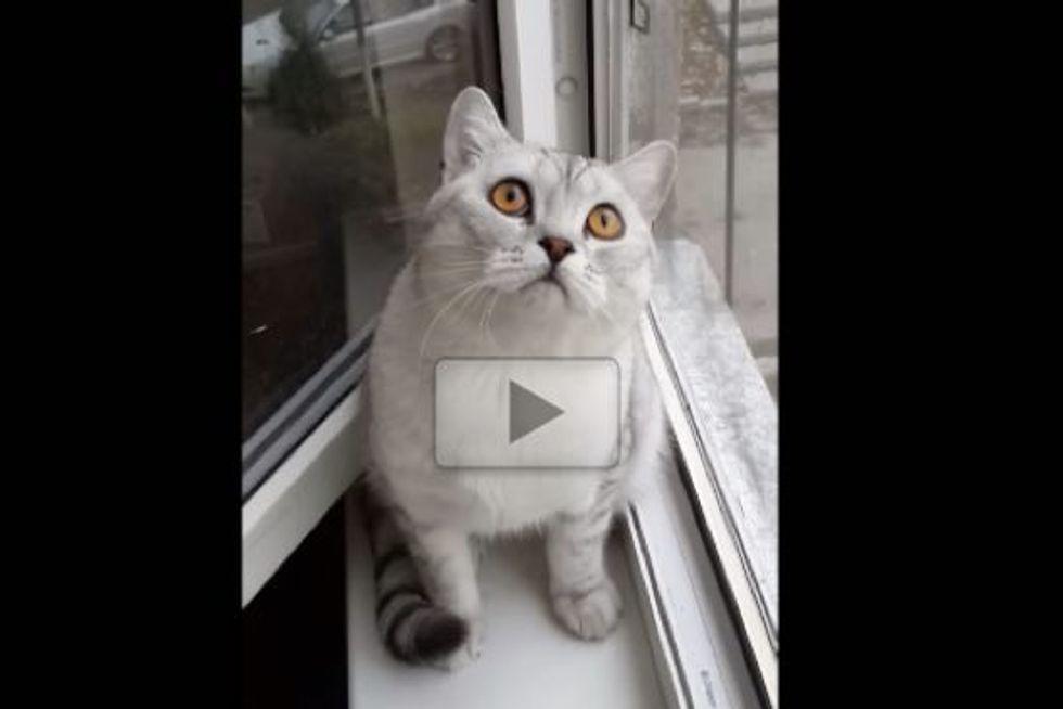 Focused Kitty Is Focused!