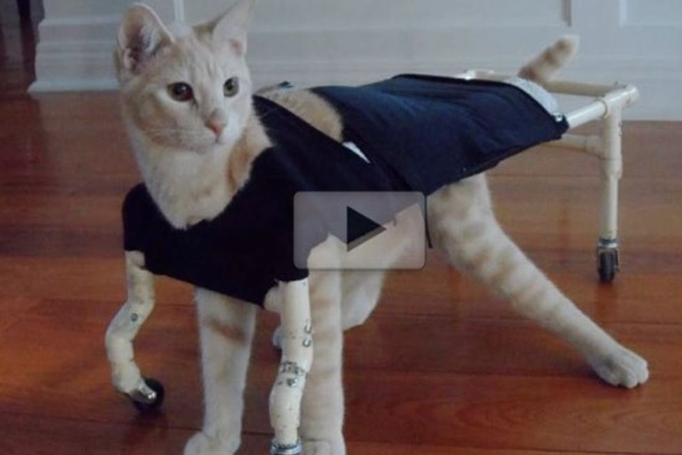 Budd The Wobbly Kitty Doesn't Let Anything Slow Him Down