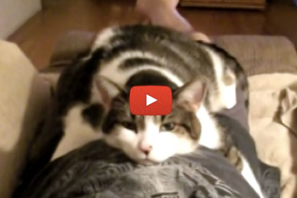Cat Gives Full Body Hug
