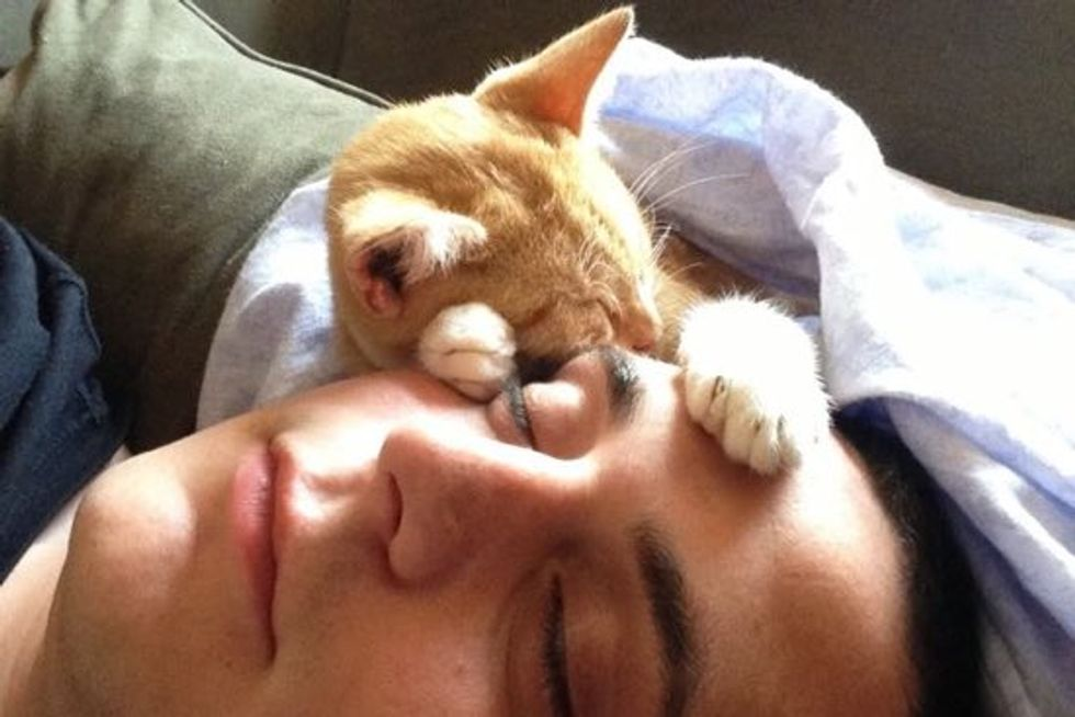 Cat Found At Gas Station Cuddles With His Rescuer
