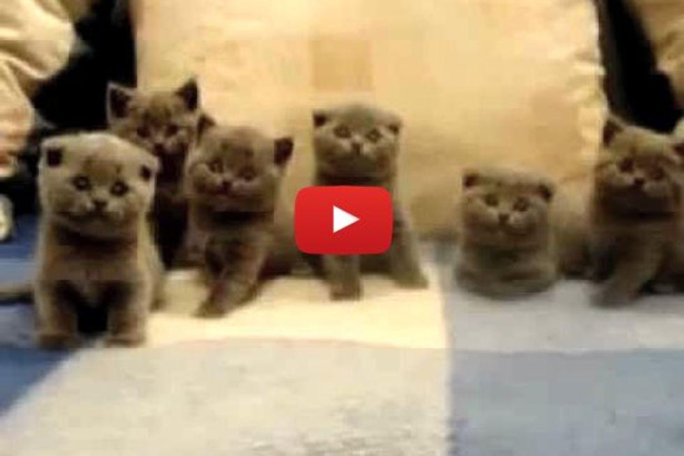 Six Little Curious Fur Babies