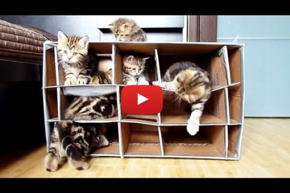 Cute Kittens And Their Handmade Fort