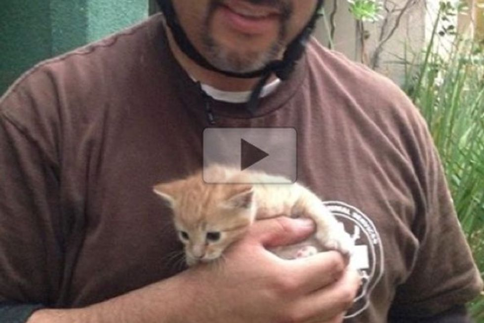 Kitten Trapped Between Walls Saved By Rescuers