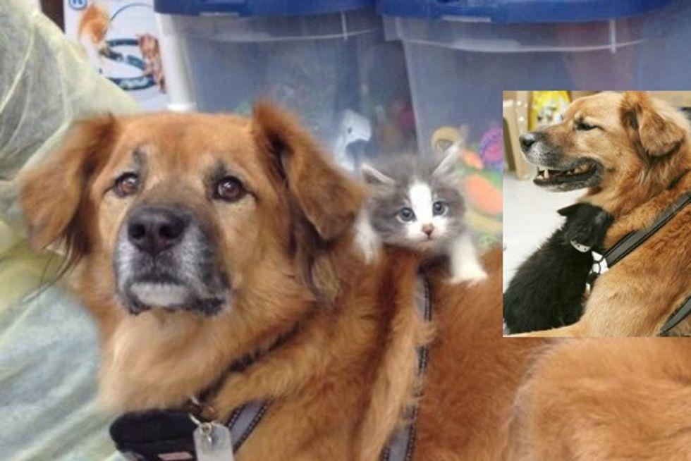 Orphaned Kittens Have A Dog Nanny, Boots, Hurricane Katrina Survivor