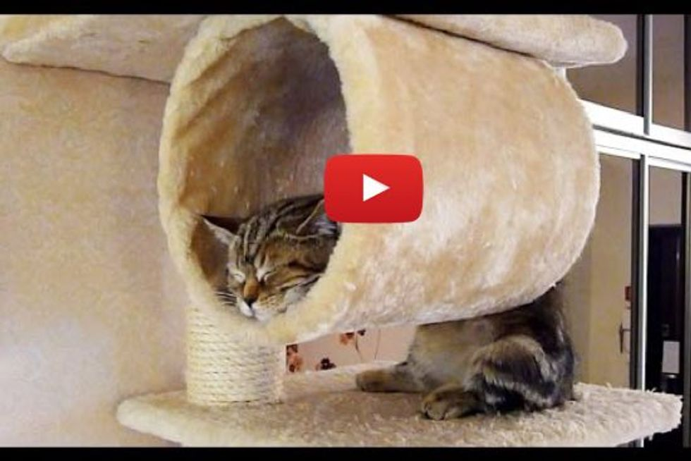 Cats Sleeping In Silly And Cute Ways