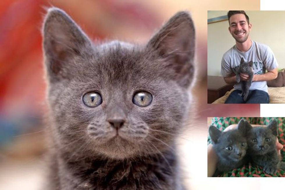 Dirty Bucket Kitten Gets Adopted!