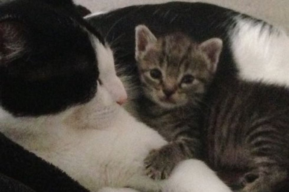 Kitten Found In A Box Now Has A Home