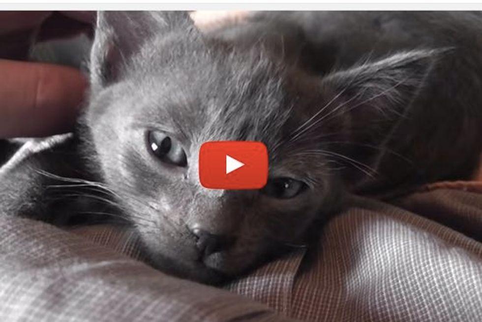 Cute Kittens Run Their Purr Motors