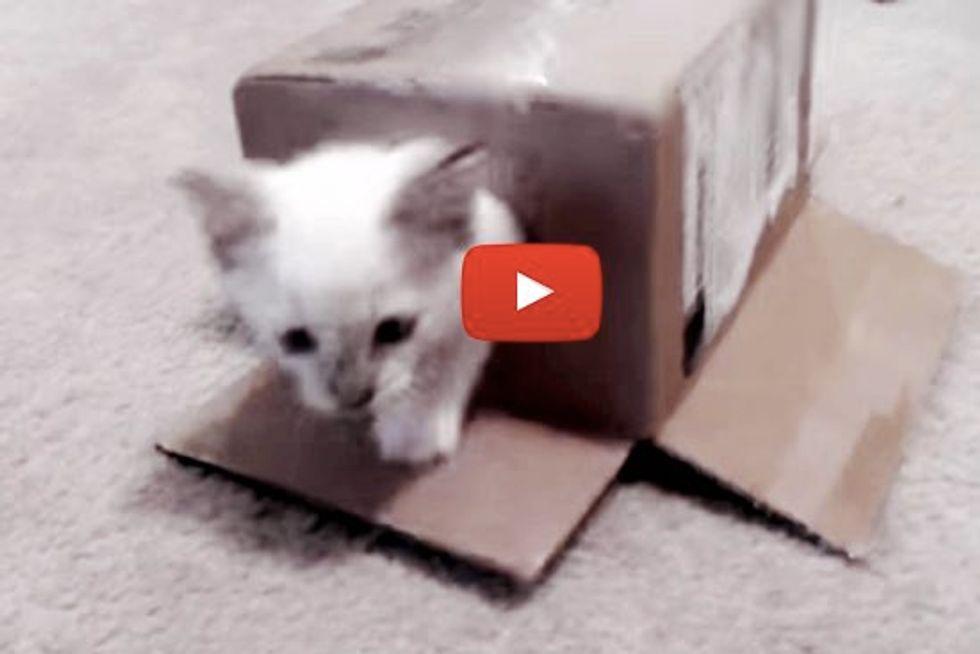 Kitty's First Cardboard Box