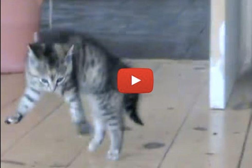 Funny Kitty Sideways Jump