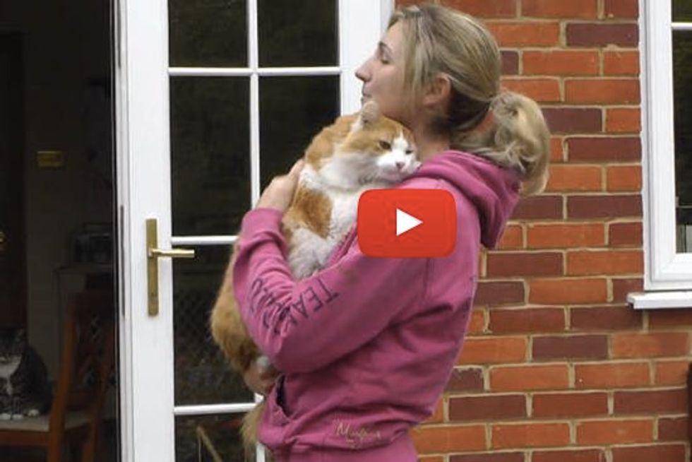 Marmalade The Hugging Rescue Cat