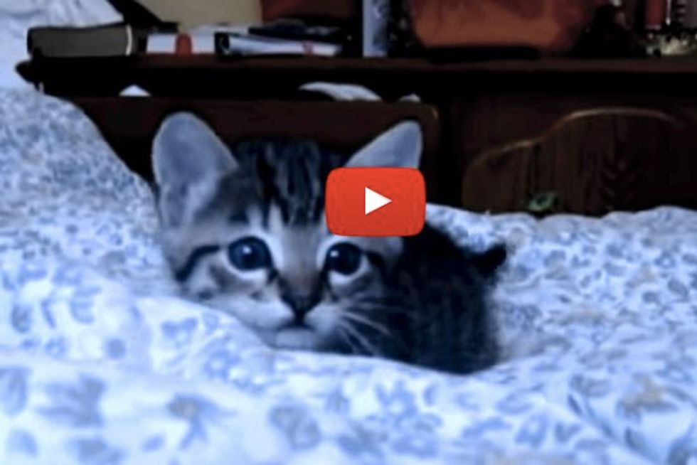 Mother Cat Watches Kitten Playing With Camera