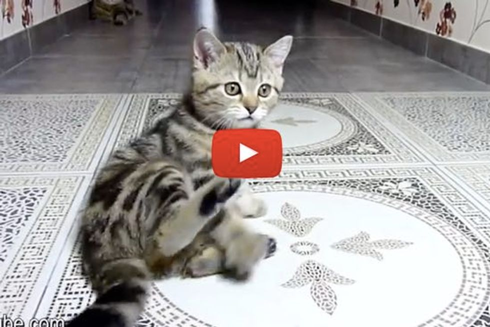 Kitten Tries To Catch His Tail