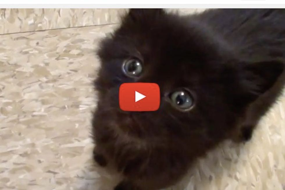 MEOW MIX! Kittens & Cats Meowing