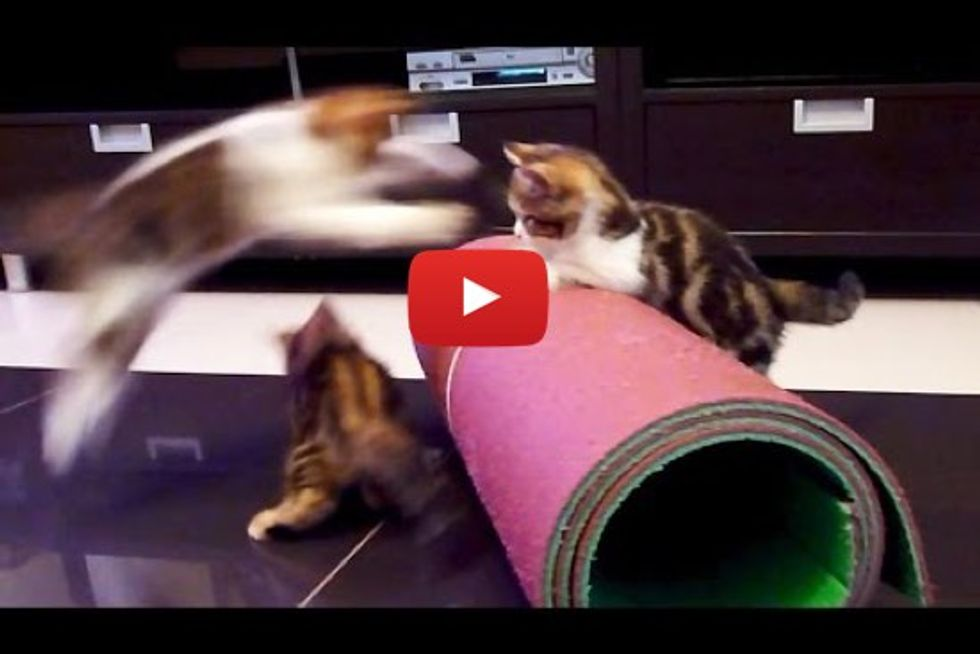 Kittens Go Crazy With Yoga Mat