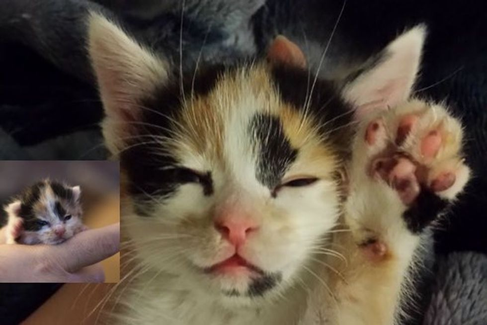 Orphan Kitten Finds A Second Chance