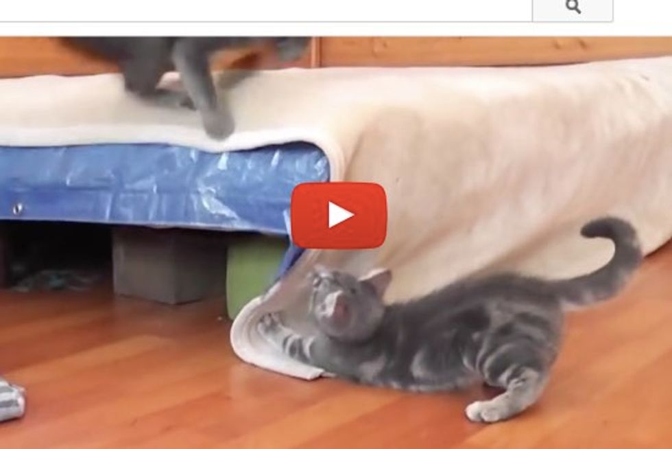 Kitten Sneaks Up To Scare Mama Cat