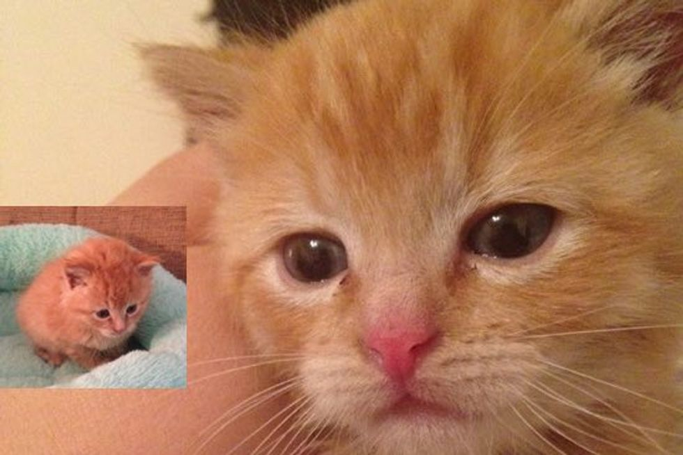 Kitten Rescued by Pet Supply Store Employee