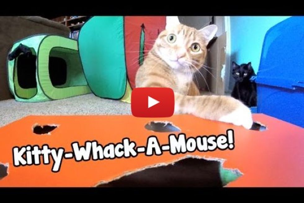 GoPro: Kitty-Whack-A-Mouse!