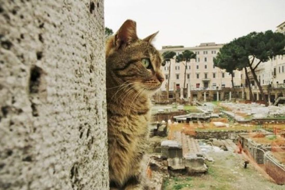 Roman Cats Turn A Historic Site Into Cat Haven