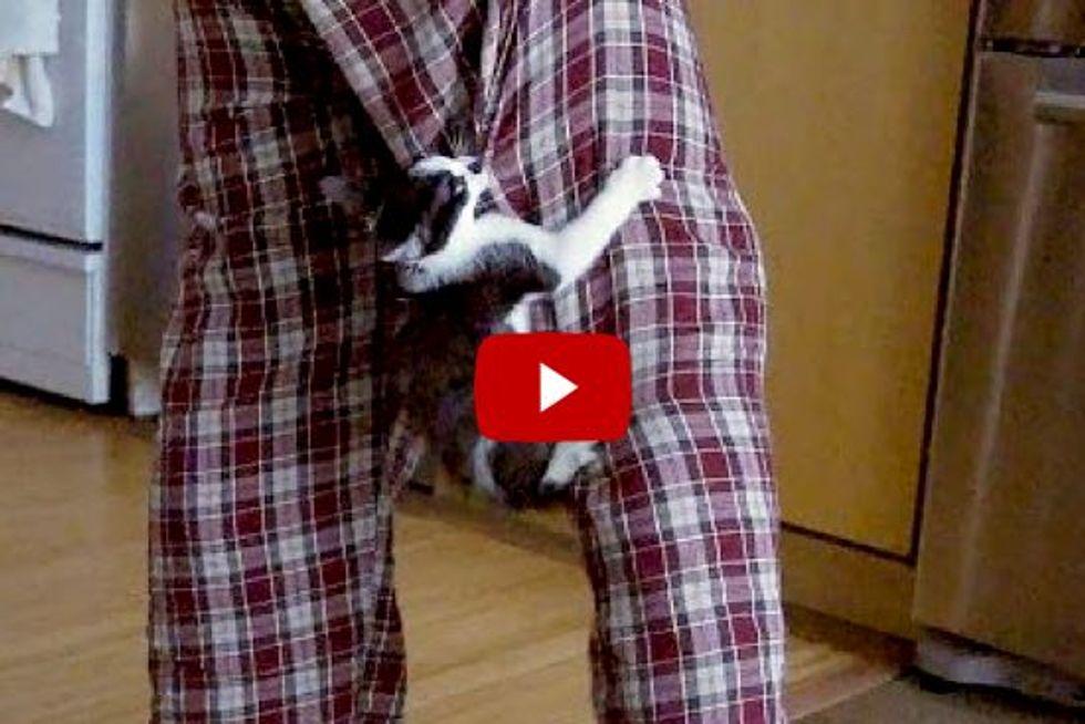 Cat Defends Human