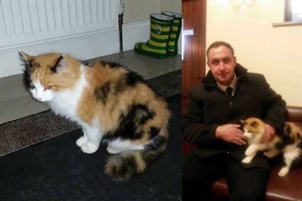 Cat Turns Up To Funeral of Cat-lover