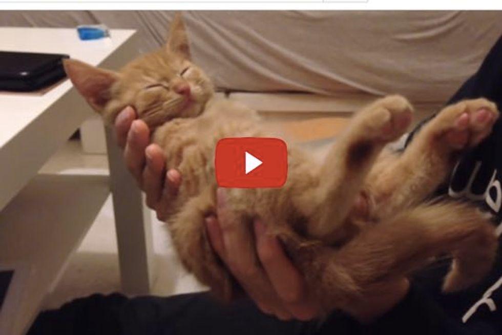 Kitten Falls Asleep In Hands
