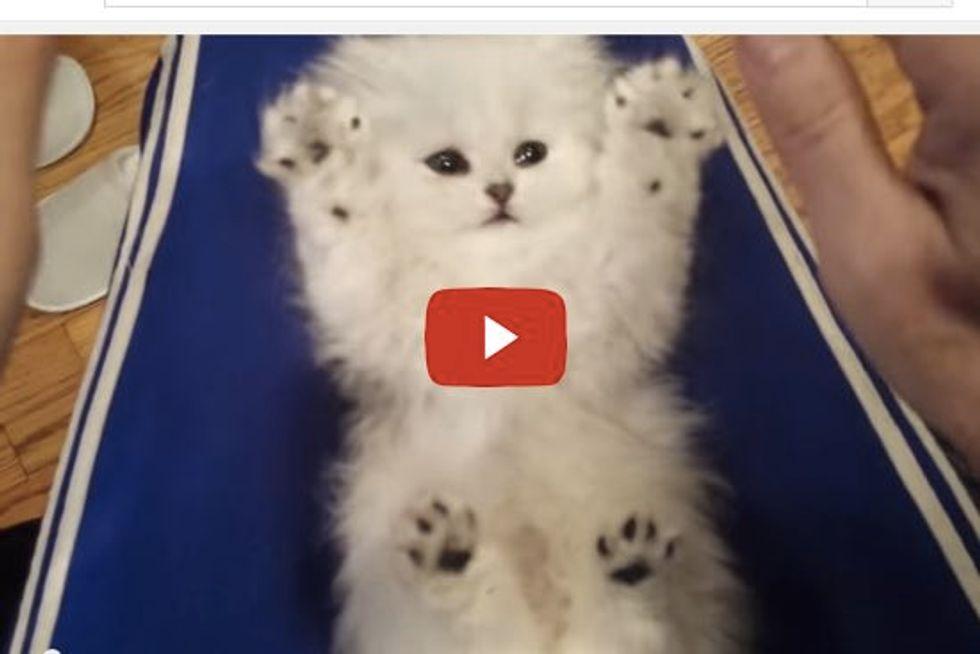 Ticklish Kitten Unbelievably Cute Toe Beans!